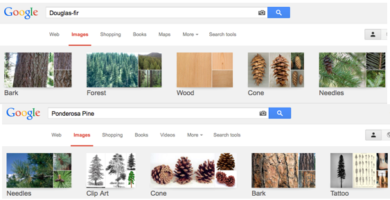 Comparing Google images of the species